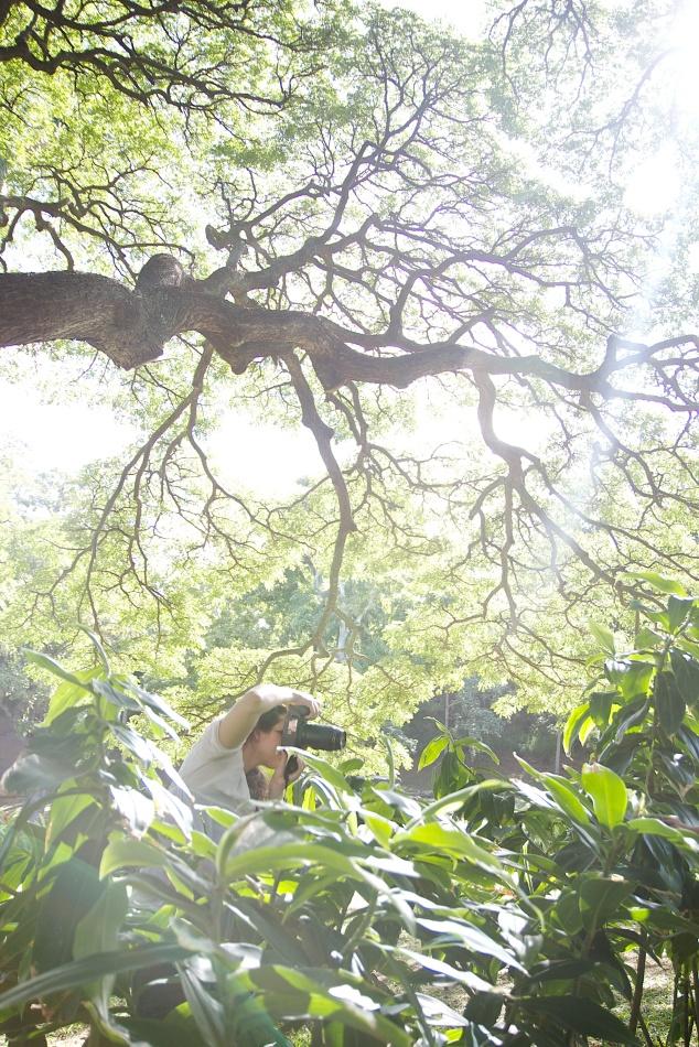 moanalua gardens 2
