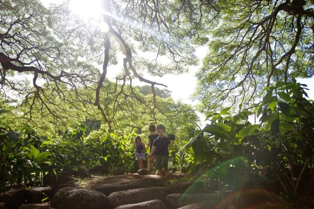 moanalua gardens (3)
