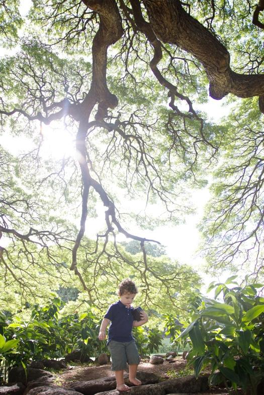 moanalua gardens (4)